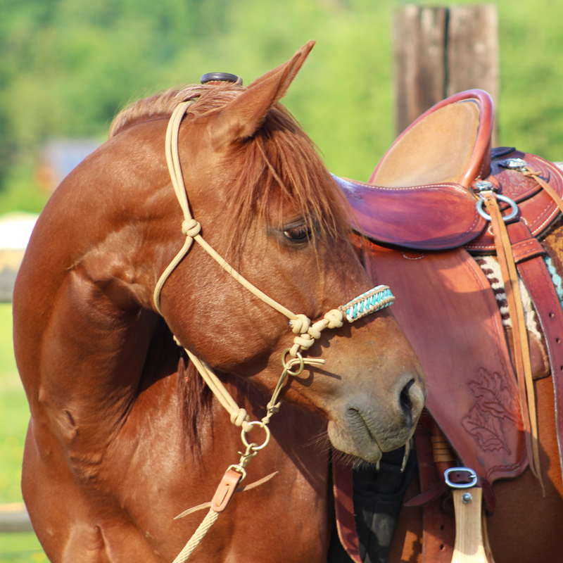 Tréninková ohlávka béžová, oplet Haidi v barvách oříšková hnědá (možno zaměnit za jílovou béžovou), bílá, tyrkysová, na rezavém koni s westernovým sedlem a westernovou dečkou